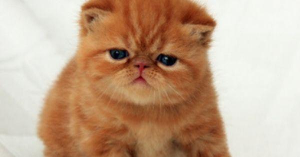 Pin On Cuteness