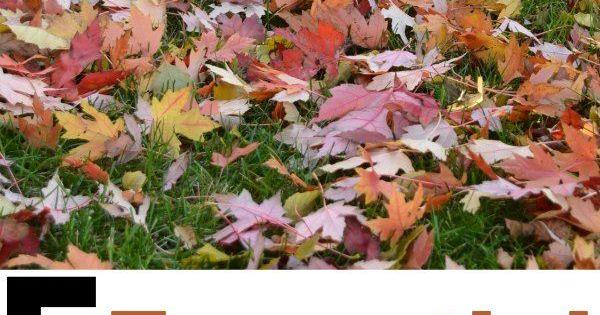 5 essential fall garden tasks gardens vegetable garden and garden projects - Fall gardening tasks ...