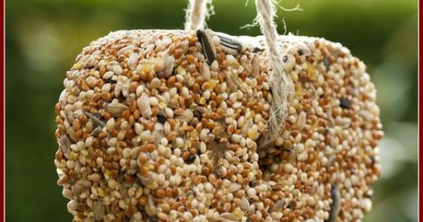 how to make bird seed ornaments with lard