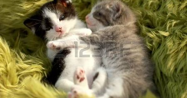 Cute Little Kittens Outdoors In Natural Light Kittens Cutest Cute Little Kittens Kittens Cutest Baby