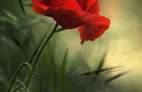 Pin By Alicja On Tattoo Sadzenie Roslin Kwiatowe Ogrody Sadzenie Kwiatow