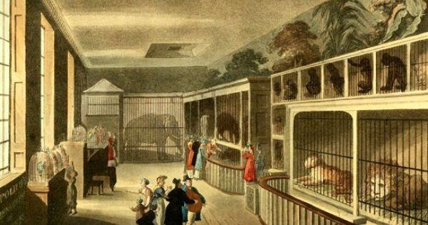 Swiss Cheese Ethical Holes In Historical Zookeeping London Zoo Regency London Regency