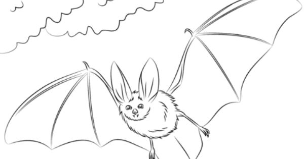 Townsend S Big Eared Bat Coloring Page Free Printable Coloring Pages Bat Coloring Pages Animal Coloring Pages Coloring Pages