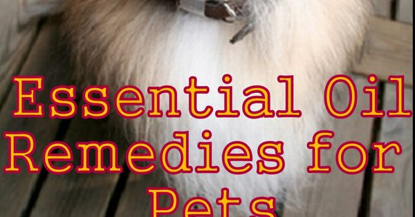 Essential Oil Remedies for Pets - Watch The Dog Whisperer use Lavender