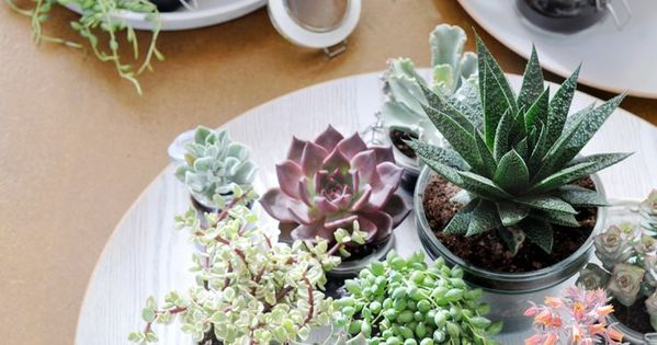 Give each of your guests their own unique succulent. This is the