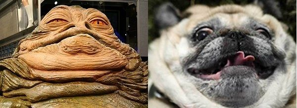 10 Pugs Who Look Like Things Pugs Funny Animals Funny Dogs