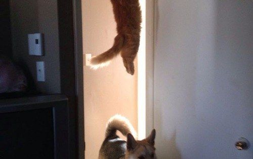 The cat who watched one too many episodes of Mission Impossible. |