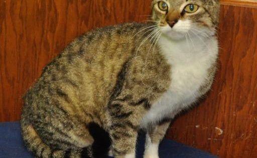 Adopt Victoria On Pet Rocks Adoption Pet Care