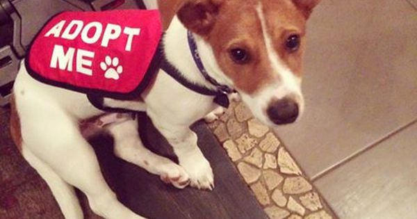 Adopt Me Dog Jacket Vest From Mycraftydog Com Get Your Foster Dog Noticed Foster Dog Dog Jacket Rescue Dogs