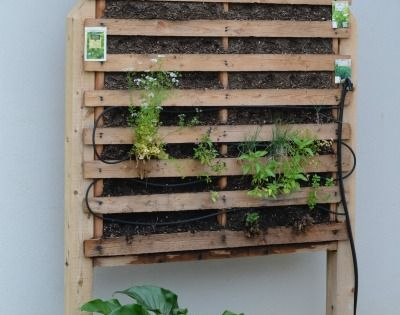How to build a vertical garden using pallets pallets for How to make a vertical garden frame