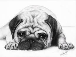 Image Result For Cute Pug Drawing With Images Puppy Sketch