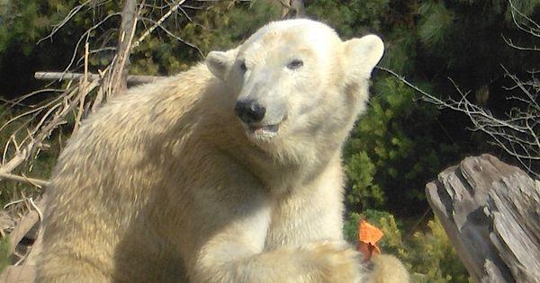san diego zoo memorial day weekend