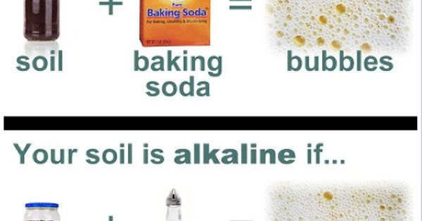 Soil pH Levels for Plants