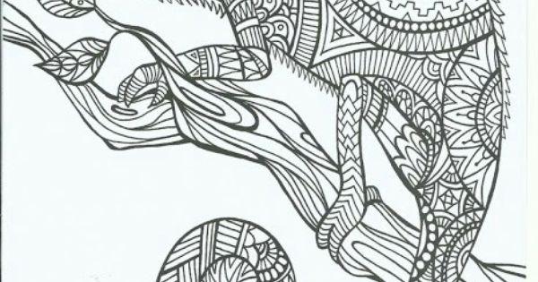 chameleon adult coloring page  ferdinand  pinterest
