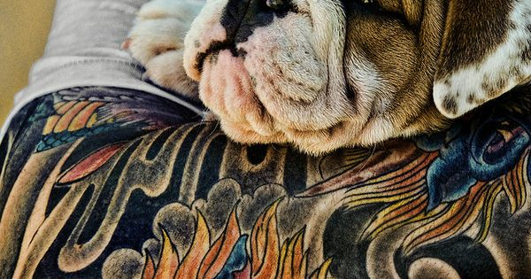 #Bulldog Cute Tattoos Photography Dogs