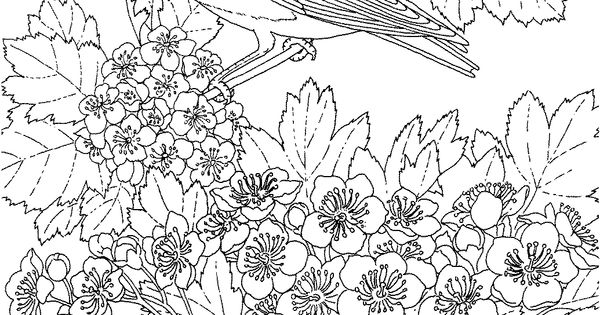 Missouri state bird and flower eastern bluebird hawthorn for Eastern bluebird coloring page