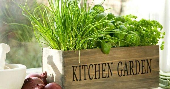 mini jardini res et pots d int rieur aux herbes aromatiques caisses de vin herbes aromatiques. Black Bedroom Furniture Sets. Home Design Ideas