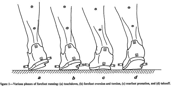 pronation in forefoot strike running accelerates stability