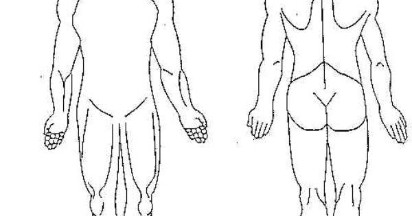 human body diagram blank