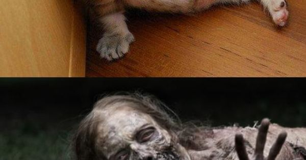 Kitty vs. Walking Dead zombie