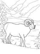 Argali Mountain Sheep Coloring Page With Images Coloring Pages
