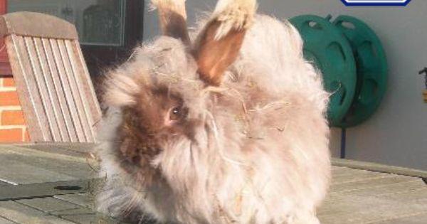 Freddy Domestic Rabbit Rspca West Suffolk Branch Cute Animals
