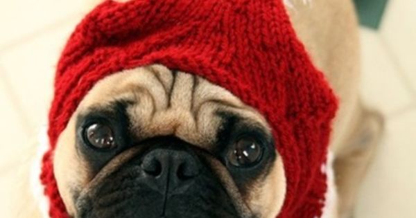 Pug Balaclava Knitting Pattern : keeping with the holiday theme! Pugs in Hats Pinterest ...