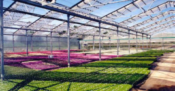 Retractable Roof Greenhouse Aframe Greenhouses Greenhouse Retractable Roof Greenhouse Growing