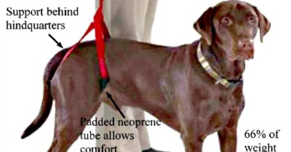 Watsons Bottoms Up Leash Dog Harness For Supporting Back Legs