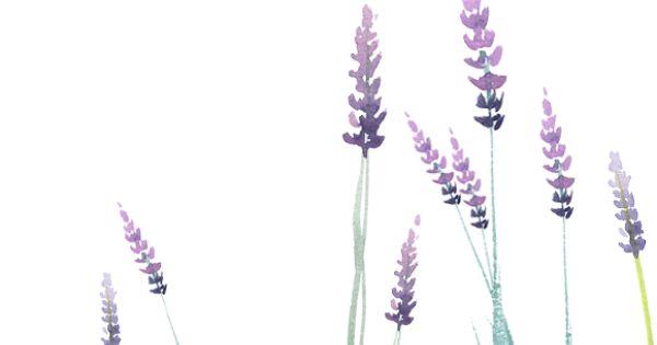 Watercolor Lavender clipart set - Illustrations - 2 ...