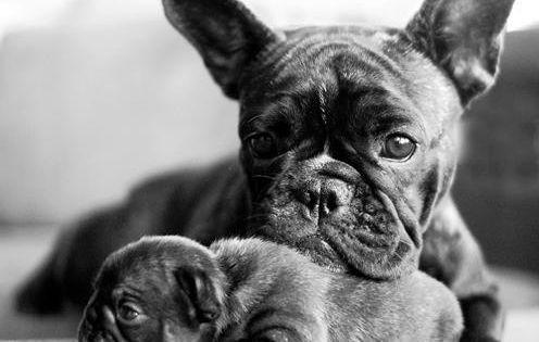 Dog - fine picture