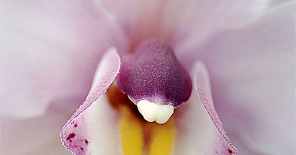 Orchid bouquet - Soft on Orchids