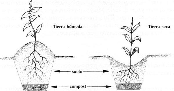 Todo sobre los arboles frutales cultivo de frutales for Arboles frutales para jardin