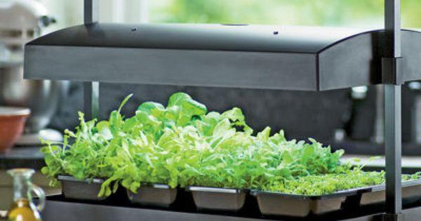 My greens light garden grow fresh herbs and salad green for Garden supply burlington vermont