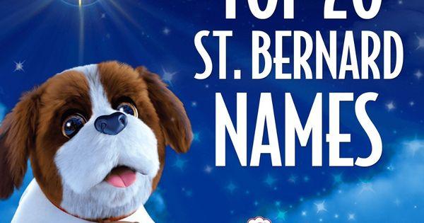 Saint Bernard Names Puppy Names The Elf On The Shelf Santa S Saint Bernards Elf Pets Saint Bernard Bernard