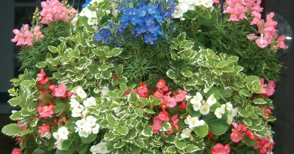 How To Grow Fuller Hanging Baskets Slits In Side Of