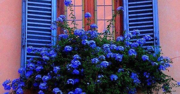 for Jardin azul canal 9
