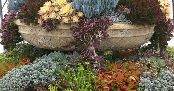 rogers gardens | Drought Tolerant Desert Plants