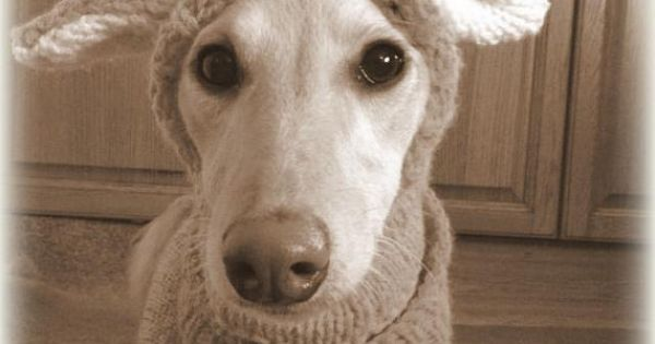 Knitting Pattern For Reindeer Antlers : PDF Knitting Pattern for a Reindeer Antler Hat for Dogs - Instant Download by...