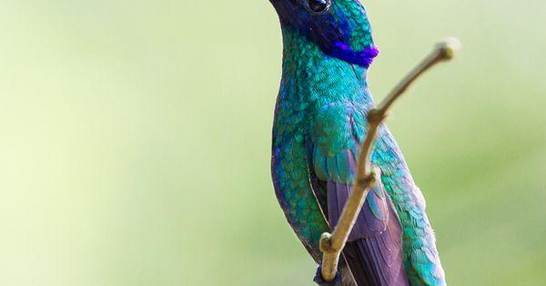 Beautiful bird... one was enjoying my holly bush