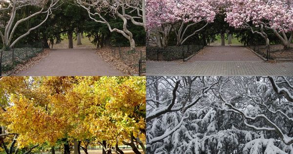 Four seasons pictures of couples and seasons on pinterest