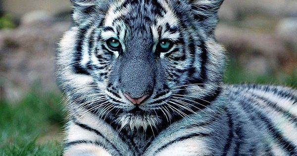 Yury Takahashi | Creature & Nature | Pinterest