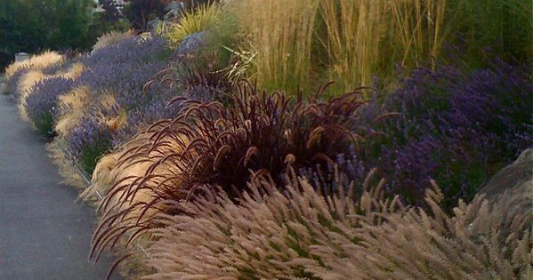 Stunning mix of grasses and lavender. Probably have to use catmint around