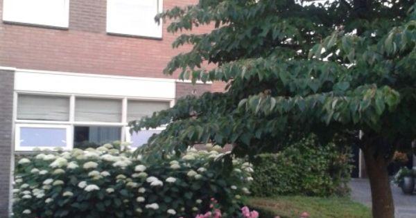 Helsen tuinen pinterest tuinen - Kleine designtuin ...