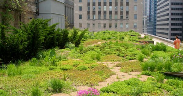 Chicago City Hall Roofmeadow Green Roofs For Good Rooftop Garden Roof Garden Elevated Gardening