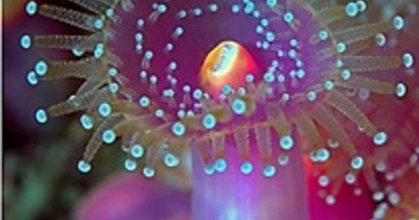 Jehovah created such pretty sea life. It's sad that the majority of