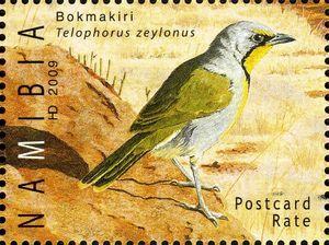 Stamp Bokmakiri Telophorus Zeylonus Namibia The Brandberg Mi Na 1311 Wad Na011 09 Buy Sell Trade And Exchange Co African Animals Stamp Postage Stamps