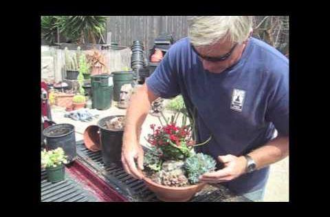 Diy succulent dish garden soil mix 5 parts pumice of for Four parts of soil