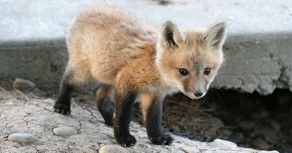 Scout's Stitches: Tuesday 10- Cute Baby Animals