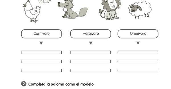 Animales Omnivoros Dibujos Para Colorear: Ficha Animales Herbívoros Carnívoros Y Omnívoros Para